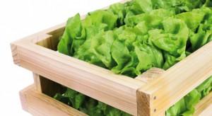 Green Factory i Jeronimo Martins wspólnie edukują jak zdrowo jeść