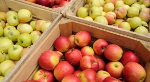 Rynek jabłek w UE: we wrześniu jabłka kosztowały średnio 0,73 EUR/kg