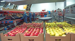 Ukraina w ciągu ostatnich 5 lat potroiła eksport owoców do UE