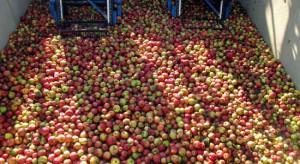Wysokie ceny jabłek przemysłowych w całym kraju. Wahają się między 0,90-1,05 zł/kg