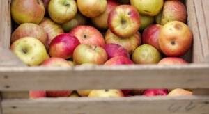 Mazowsze: Ceny jabłek przemysłowych w dalszym ciągu spadają