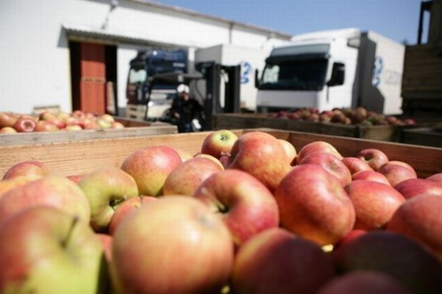 Wyższe ceny jabłek mogą odbić się na wizerunku polskich eksporterów