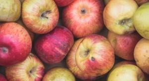 Dalszy spadek cen jabłek przemysłowych. Przetwórnie wprowadziły limity