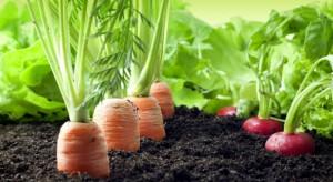 Rolnictwo potrzebuje innowacji (wideo)