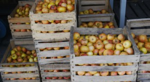 Mazowsze: Część skupów zawiesiła zakupy jabłek przemysłowych