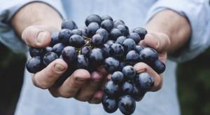 Winogrona - dobre dla zdrowia i urody