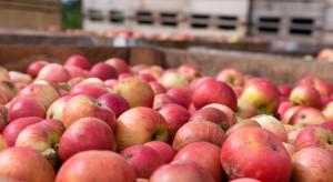 Rynek jabłek: Wysokie ceny, niska jakość