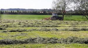 Jak skutecznie zwalczać chwasty na użytkach zielonych?