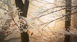Prognoza pogody: Opady deszczu i deszczu ze śniegiem; w nocy możliwe przymrozki
