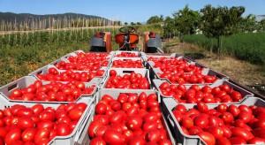 Nie sposób z roku na rok dokładać do pomidorów (wywiad)