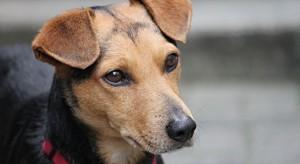 Nowe prawo zakaże trzymania psów na uwięzi? (wideo)