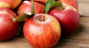USDA: Światowe zbiory jabłek zbliżone do średniej z 3 lat