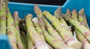 Nowe odmiany szparaga na bielone i zielone wypustki
