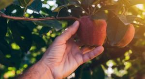 2017 rok w uprawie owoców i warzyw - kto poniósł największe straty?