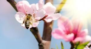 Jak zadbać o pszczoły aby zwiększyć plony?