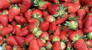 Arabia Saudyjska zakazuje importu truskawek z Egiptu