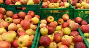 Bronisze: Zła jakość przechowalnicza powodem wzrostu cen jabłek