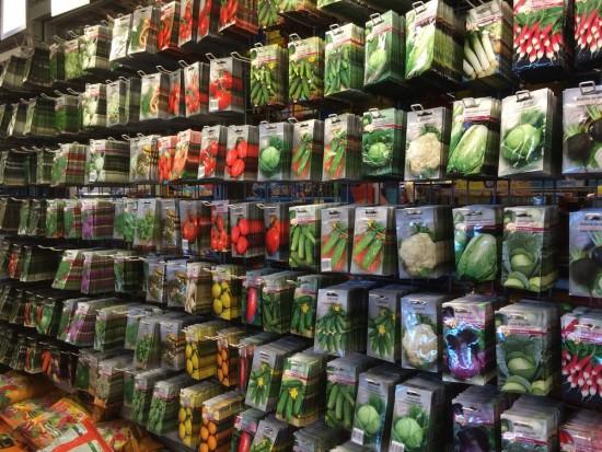 Wszystko zaczyna się od nasion – na co zwrócić uwagę przy doborze odmian warzyw?