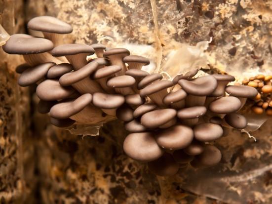 Francja: Produkcja grzybów pod ziemią coraz popularniejsza