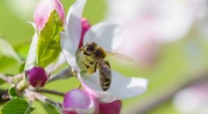 Komisja PE: Trzeba bardziej chronić populację pszczół w UE