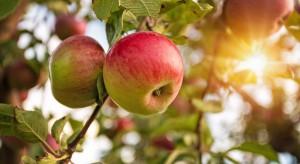 Ukraina stawia na produkcję owoców. Czy polscy sadownicy mają się czego obawiać?