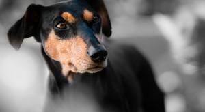 Zaostrzono kary za znęcanie nad zwierzętami