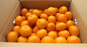 Hiszpania: Zatrzymano trzy samochody z czterema tonami skradzionych pomarańczy