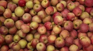 Rosjanie kontrolują producentów jabłek i ogórków na Białorusi