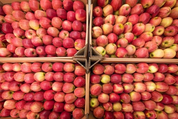 WAPA: Największe zapasy jabłek we Włoszech i w Polsce