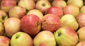 Jakie odmiany jabłek dominują w polskich chłodniach?
