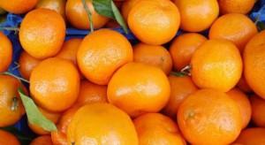 Włochy: 180 osób odniosło obrażenia w karnawałowej bitwie na pomarańcze