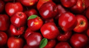 Włosi przewidują wcześniejsze zakończenie obecnego sezonu sprzedaży jabłek
