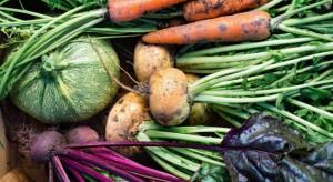 Łotwa zmaga się z niedoborami warzyw i ziemniaków. To efekt powodzi
