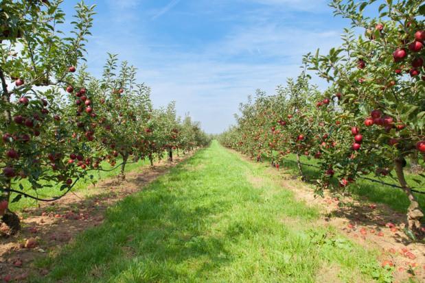 Czy powinniśmy obawiać się Ukrainy, Serbii i Mołdawii jako eksporterów owoców?