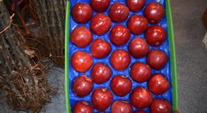 Odmiany jabłoni – jakie nowości w ofercie szkółkarzy? (zdjęcia)