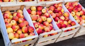 Bronisze: Ceny jabłek stabilne. Jednak wyraźnie wyższe niż rok temu