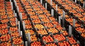 Prezes VegaPolu o produkcji pomidorów: To nie jest taki spokojny biznes, jakby się mogło wydawać