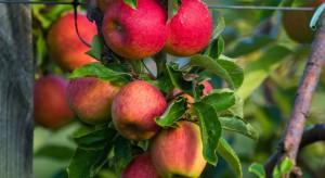 Krzysztof Krupa, Syngenta: Produkcja jabłek bez przekroczonych pozostałości jest możliwa