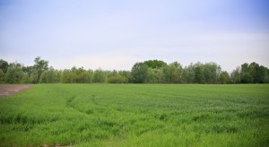 KOWR i KRIR: Podpisano porozumienie ws. ujednolicenia kryteriów przy dzierżawie ziemi