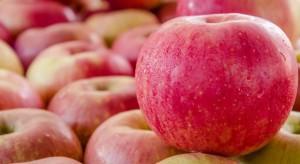 Chiny: Produkcja jabłek wyższa niż popyt, ceny spadają