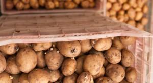 W 2017 r. Ukraina trzykrotnie zwiększyła eksport ziemniaków