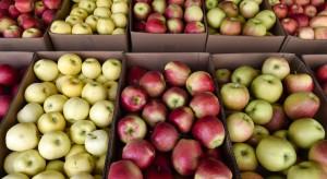 Mniej jabłek, ale wysokie ceny rekompensują straty