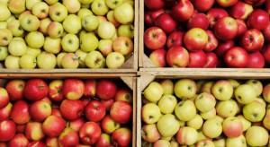 Ceny jabłek dwukrotnie wyższe niż przed rokiem