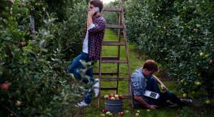 Bracia Sadownicy - na Kujawach powstała nowa marka jabłek i soków
