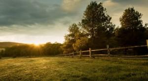Rolnicy chętnie dzierżawią państwowe grunty