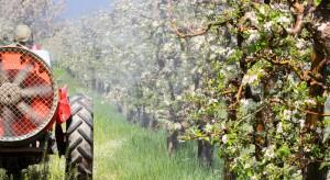 Stosowanie nielegalnych środków ochrony roślin to złudna oszczędność