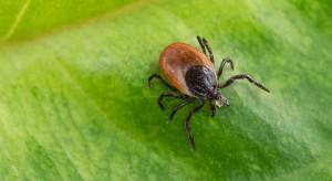 Łagodna zima nie ma dużego wpływu na komary, kleszcze i drobnoustroje