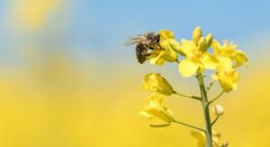 Zakaz ws. neonikotynoidów może dotknąć większość środków ochrony roślin