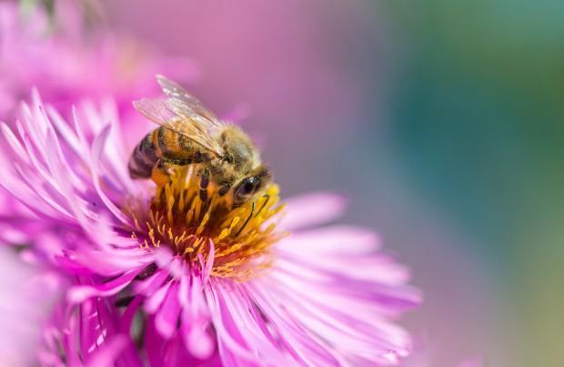 Syngenta rusza z czwartą edycją akcji na rzecz owadów zapylających