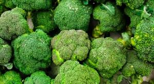 Hiszpania: Choroby i szkodniki nie oszczędziły plantacji brokułów
